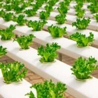 The Secret Of Different Vegetable Garden Ideas