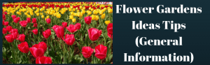 Flower Gardens Ideas Tips (General Information)
