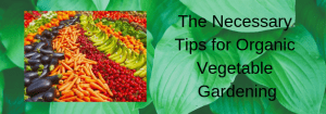 The Necessary Tips for Organic Vegetable Gardening