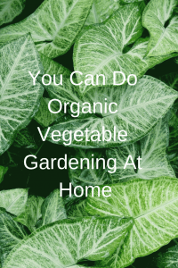 You Can Do Organic Vegetable Gardening At Home