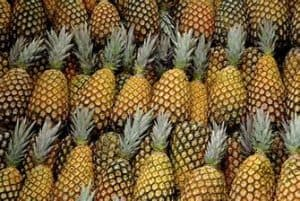 pineaples lot